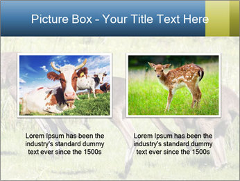 Three Kangaroos PowerPoint Template - Slide 18