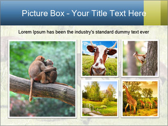 Three Kangaroos PowerPoint Template - Slide 19