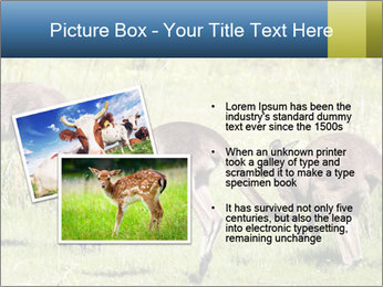 Three Kangaroos PowerPoint Template - Slide 20