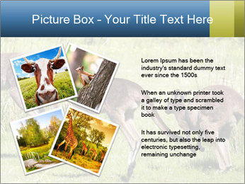 Three Kangaroos PowerPoint Template - Slide 23
