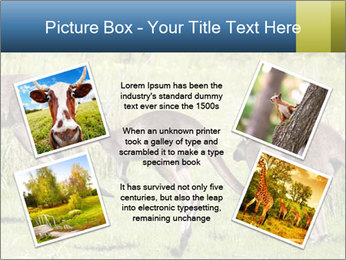 Three Kangaroos PowerPoint Template - Slide 24