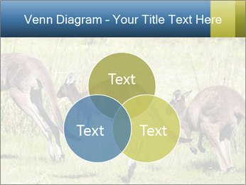 Three Kangaroos PowerPoint Template - Slide 33