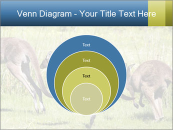 Three Kangaroos PowerPoint Template - Slide 34
