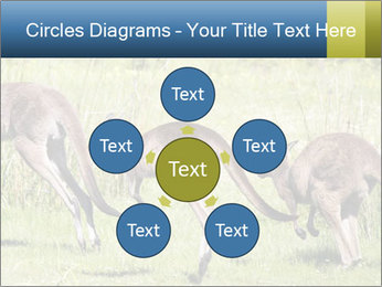 Three Kangaroos PowerPoint Template - Slide 78