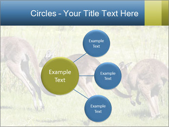 Three Kangaroos PowerPoint Template - Slide 79