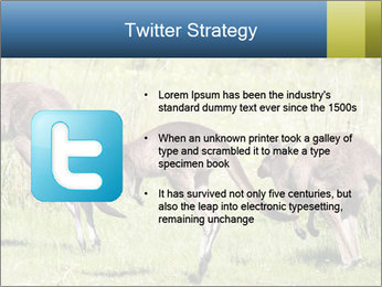 Three Kangaroos PowerPoint Template - Slide 9