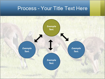 Three Kangaroos PowerPoint Template - Slide 91