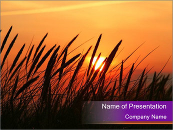 Sunset In Wheat Field PowerPoint Template