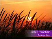 Sunset In Wheat Field PowerPoint Templates