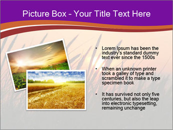 Sunset In Wheat Field PowerPoint Template - Slide 20