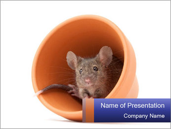 Grey mouse looking out of a flower pot PowerPoint Template - Slide 1