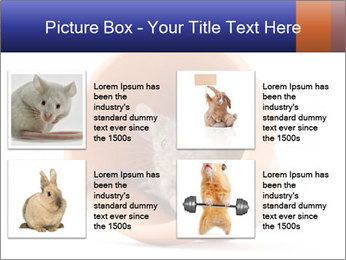 Grey mouse looking out of a flower pot PowerPoint Template - Slide 14