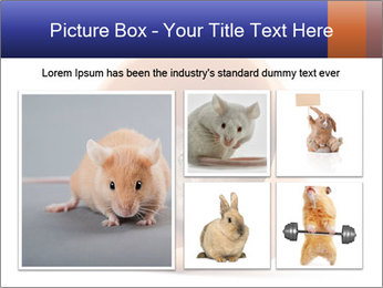 Grey mouse looking out of a flower pot PowerPoint Template - Slide 19