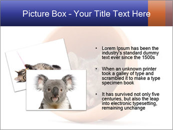 Grey mouse looking out of a flower pot PowerPoint Template - Slide 20
