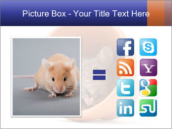 Grey mouse looking out of a flower pot PowerPoint Template - Slide 21