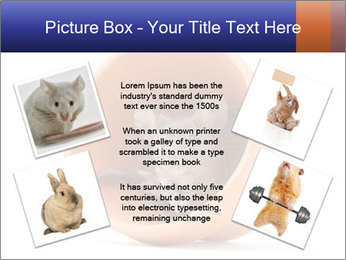 Grey mouse looking out of a flower pot PowerPoint Template - Slide 24