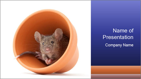 Grey mouse looking out of a flower pot PowerPoint Template