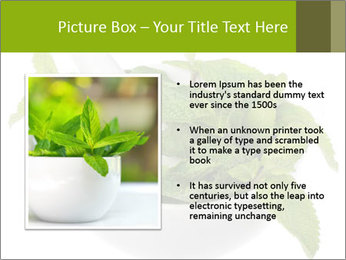 Mortar with mint isolated PowerPoint Template - Slide 13