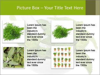 Mortar with mint isolated PowerPoint Template - Slide 14