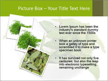 Mortar with mint isolated PowerPoint Template - Slide 17