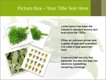 Mortar with mint isolated PowerPoint Template - Slide 23