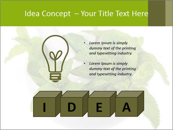 Mortar with mint isolated PowerPoint Template - Slide 80