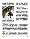 0000090120 Word Templates - Page 4