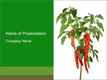 Chili pepper plant PowerPoint Template