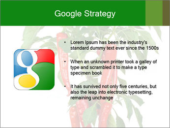 Chili pepper plant PowerPoint Templates - Slide 10