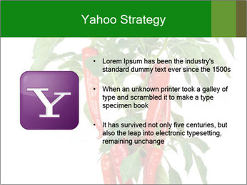 Chili pepper plant PowerPoint Templates - Slide 11