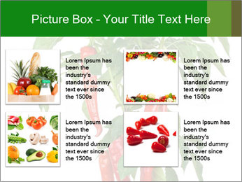 Chili pepper plant PowerPoint Templates - Slide 14