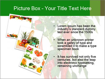 Chili pepper plant PowerPoint Templates - Slide 17