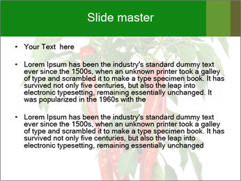 Chili pepper plant PowerPoint Templates - Slide 2
