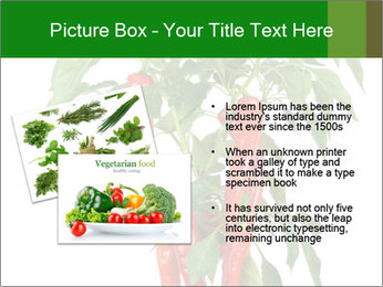 Chili pepper plant PowerPoint Templates - Slide 20