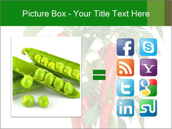 Chili pepper plant PowerPoint Templates - Slide 21