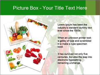 Chili pepper plant PowerPoint Templates - Slide 23
