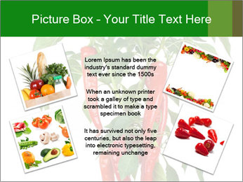 Chili pepper plant PowerPoint Templates - Slide 24