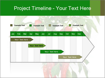 Chili pepper plant PowerPoint Templates - Slide 25