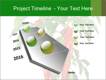 Chili pepper plant PowerPoint Templates - Slide 26