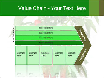 Chili pepper plant PowerPoint Templates - Slide 27