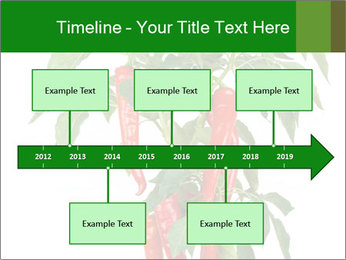 Chili pepper plant PowerPoint Templates - Slide 28