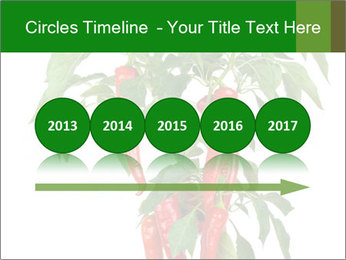 Chili pepper plant PowerPoint Templates - Slide 29