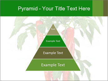 Chili pepper plant PowerPoint Templates - Slide 30