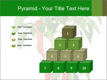 Chili pepper plant PowerPoint Templates - Slide 31