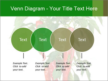 Chili pepper plant PowerPoint Templates - Slide 32