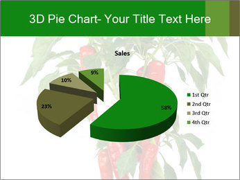 Chili pepper plant PowerPoint Templates - Slide 35