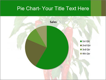 Chili pepper plant PowerPoint Templates - Slide 36