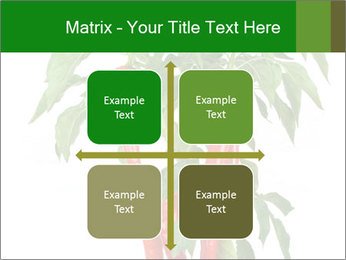 Chili pepper plant PowerPoint Templates - Slide 37