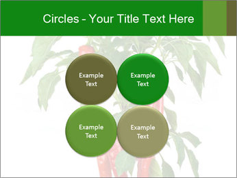 Chili pepper plant PowerPoint Templates - Slide 38