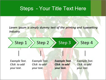 Chili pepper plant PowerPoint Templates - Slide 4